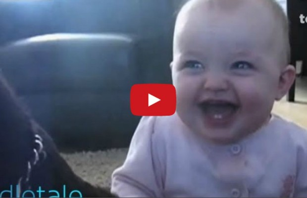 VIDEO: Baby laughing at dog