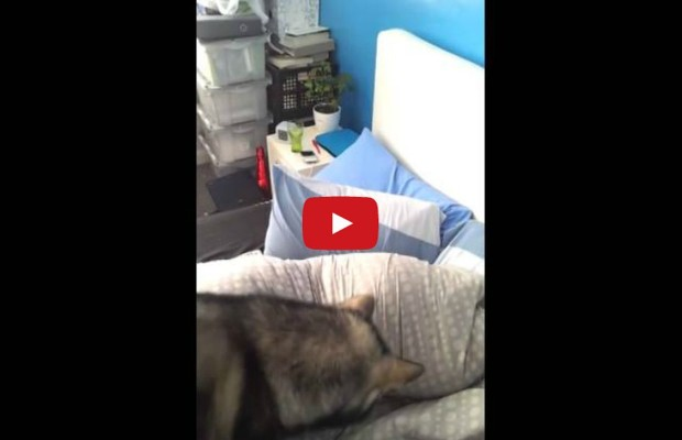 VIDEO: Laser pointer and a dog