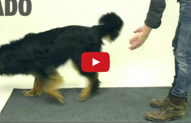 VIDEO: Tricking dogs with magic
