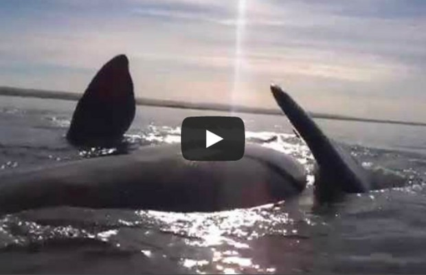 VIDEO: Whale of a tale to tell